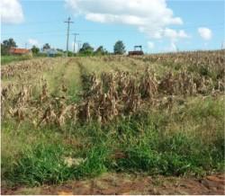 Terrenos Loteamento Lauermann